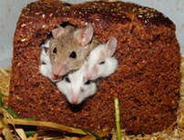 mice being cared for by noonies pet care
