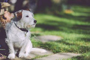 walking-garden-dog-outside